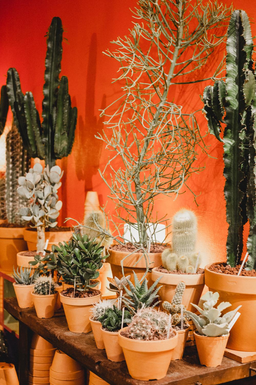 Les Succulentes Cactus