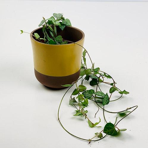 Simple Mustard Planter