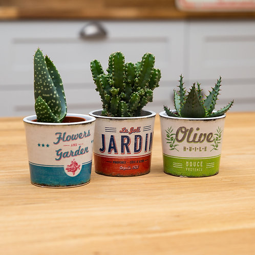 Trio of succulents with vintage style planters