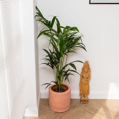 Planter no 163 (Ibiza)
