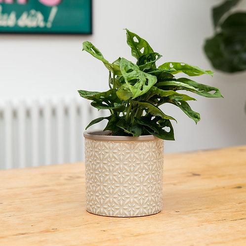 Planter no 127 (Grey Moroccan)