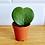 Thumbnail: Hoya Kerrii - Love Heart Plant
