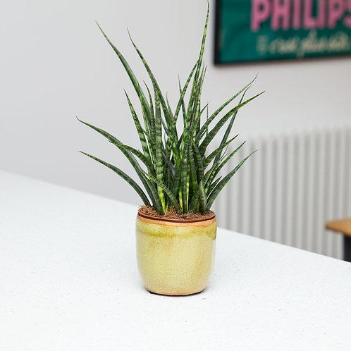Planter no 137 (Chartreuse Crackle Glaze Ceramic)