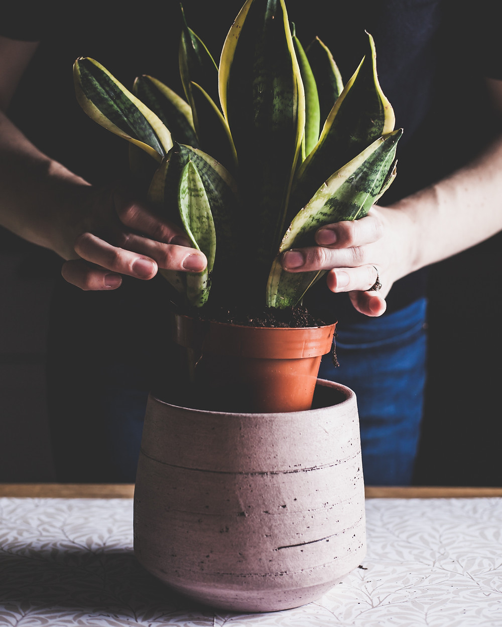 Replanting your houseplant
