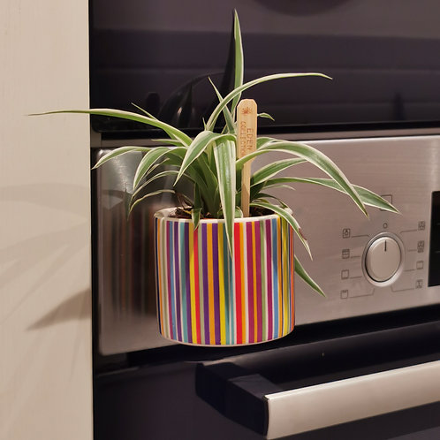MAGNETIC!!! Ceramic Planter with various mini plant options