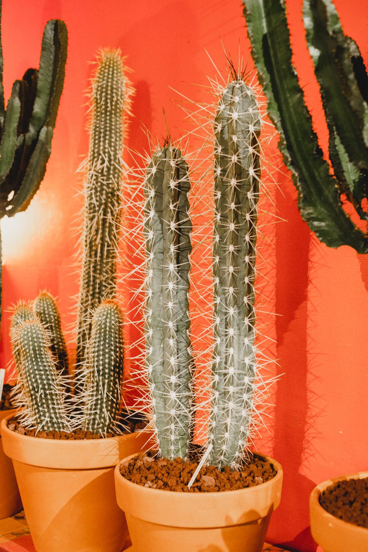 Cactus Shop Paris
