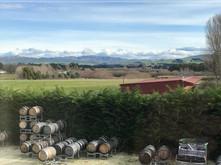Winemaker Spotlight: Dom Maxwell at Greystone, Waipara