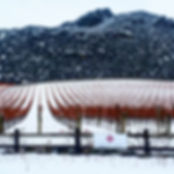 Prophet's Rock Hone Vineyard in Snow.jpg