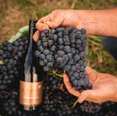 Spade Oak Wines