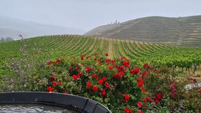 Great Kiwi Summer Wine Tour - Central Otago