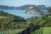 The_Landing_vineyard's_close_proximity_t