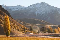 Mt Rosa Wines