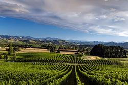 Mt Beautiful Wines