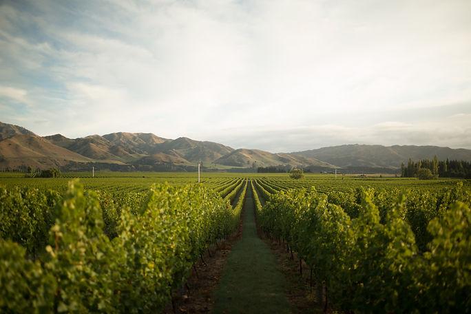 Winetopia - Villa Maria.jpg