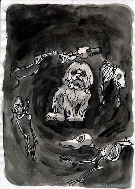 デザインされた見た目だとわかっている犬 / The dog who knows that his looks was designed by human