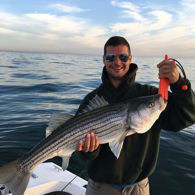 Billingsgate Striped Bass