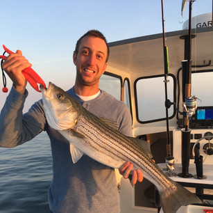 Striped Bass on Squid at Monomoy Rips