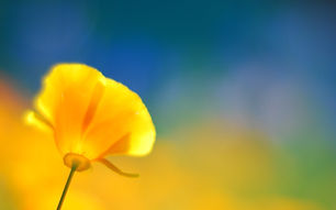 756843-popular-yellow-flower-wallpaper-2