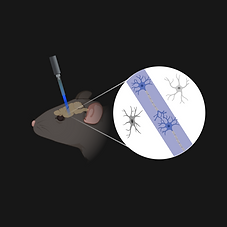 Optogenetics 2 (2).png