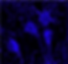 STAG_cells_edited.png