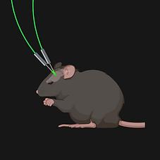 Optogenetics (3 optic fibres) (3).png