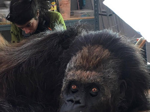 El gorila Kibubu nos visita!!