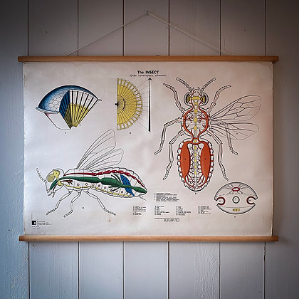 Insect anatomia