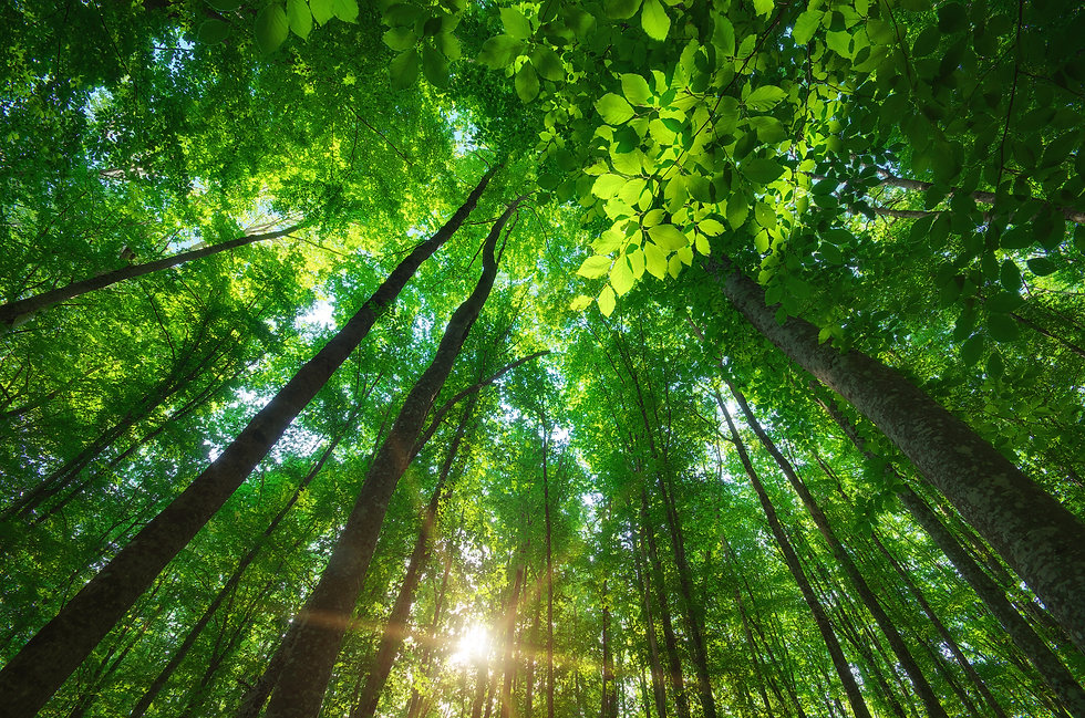 Into the forest. Nature composition..jpg