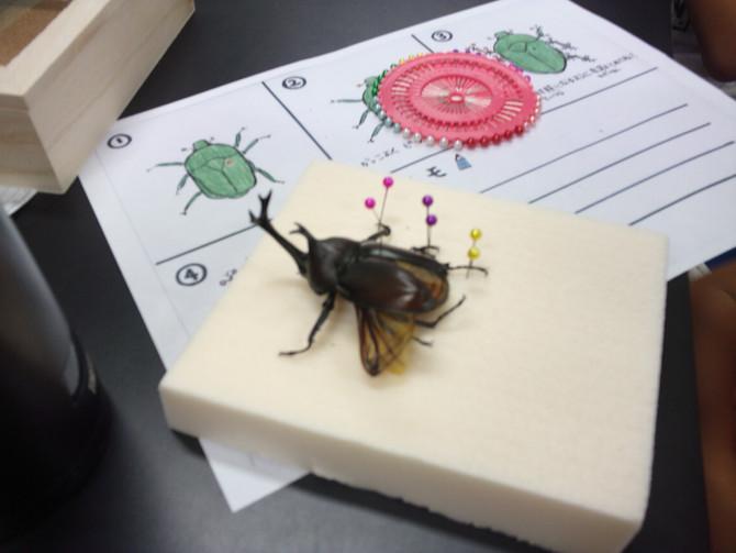 昆虫標本講座