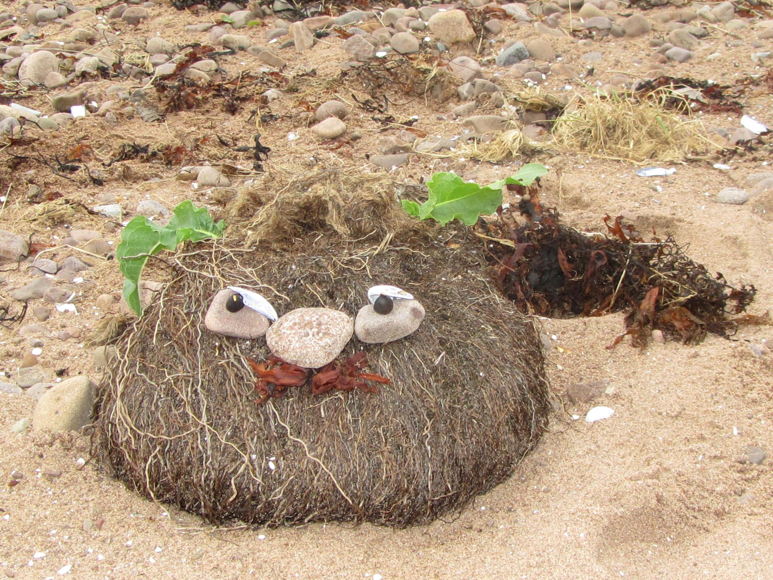 Haggis on the beach