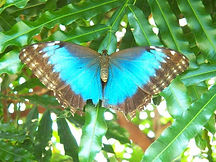 Kids Tours Wildlife Key West Butterfly Museum.jpg