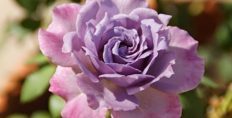 Lavender Crystal