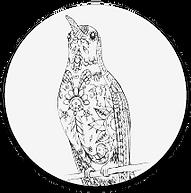 colibri-02.png