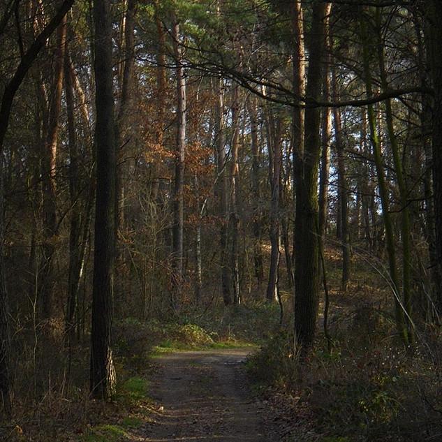 Widok w lesie.jpg