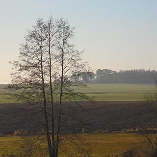 Przyroda w Skrzynkach i okolicach 5.jpg
