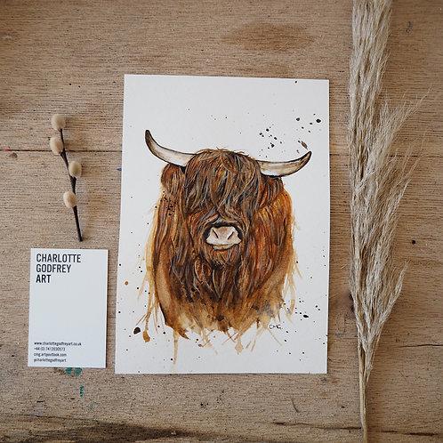 Highland cow (A5)
