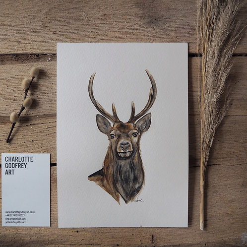 Stag (A5)