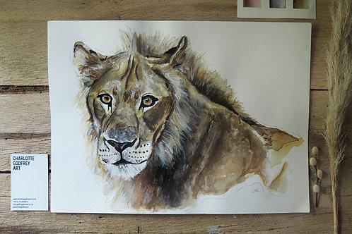 Leo Lion (A3)