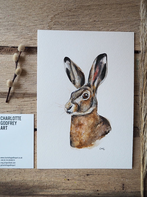 Hare (A5)