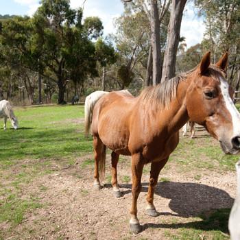Howqua Valley Views - Horse Riding