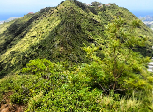 Fat Girl Hiking: Lanipo Trail