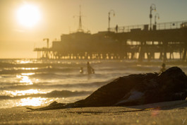 California | 2015