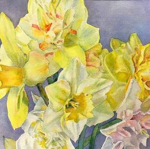 David's Daffodils