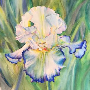 Blue-Tinged Iris