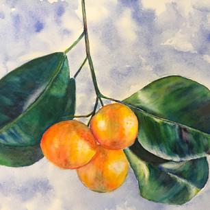 Irene's Oranges