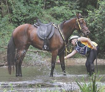 Endurance horse and rider in a stream splashing water.jpg
