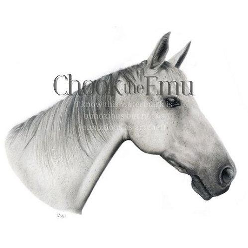 """Grey Horse"" - Wall art print"