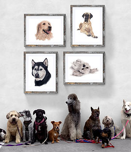Dogs with dog breed wall art as home decor   Chook the Emu