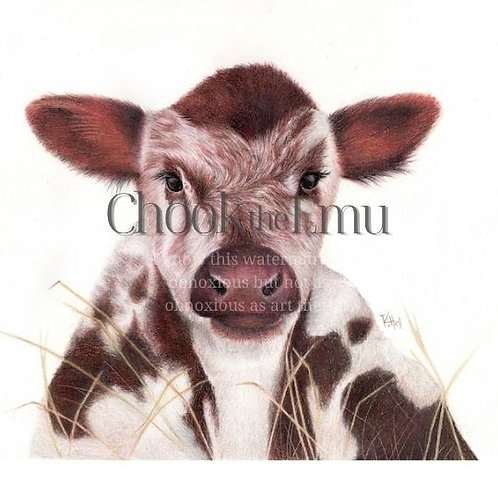 """Calf"" - Wall art print"