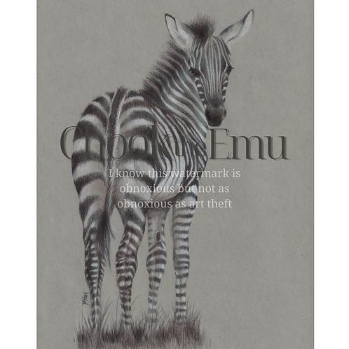 """""""Baby Zebra"""" - Wall art print"""